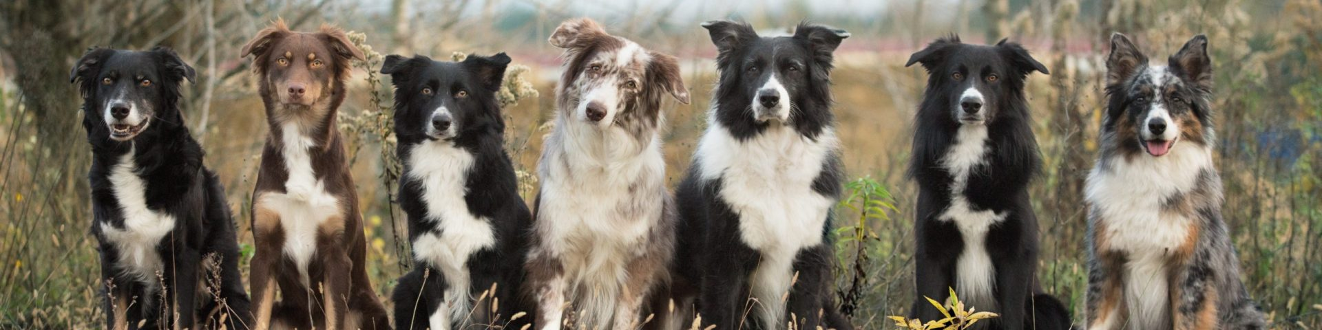 Let's talk about Australian Shepherd & Pudel